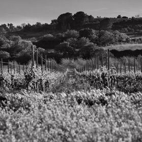 Great organic wines in Languedoc Grands vins biologiques du Languedoc