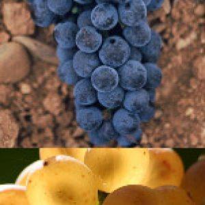 raisins rouges et blancs