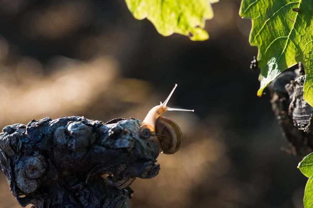 Oenotourisme CHAPELLE de NOVILIS - Oenotourisme en Herault - Tourisme du vin - Oenotourisme bio Herault - Oenotourisme bio - Oenotourisme vin biologique - Oenotourisme IGP coteaux enserune-Oenotourisme maraussan-Oenotourisme Languedoc - de La vigne à la cave-Oenotourisme herault