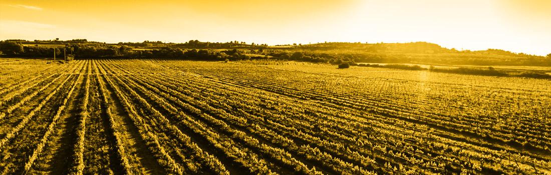 vins biologiques hauts de gamme