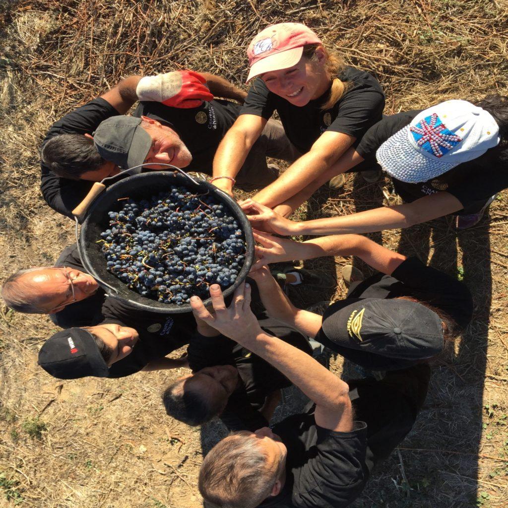 2016 HARVEST harvest 2017 vintage organic wine languedoc hérault