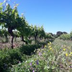 NATURAL GRASSING AT CHAPELLE de NOVILIS