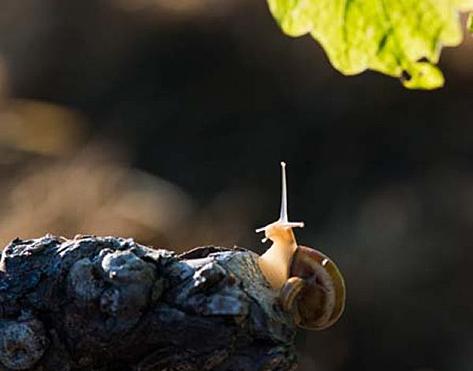Oenotourisme : balade découverte (Languedoc)